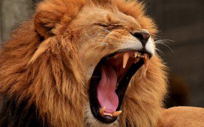 Löwenstarke Website-Lösungen zur Verbesserung der Benutzererfahrung